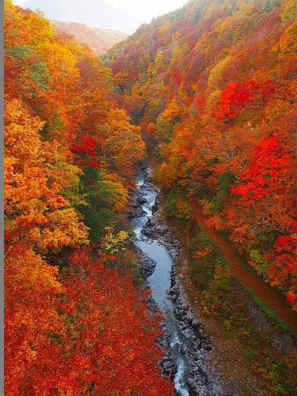 磐梯レークラインの紅葉