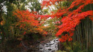 修善寺~温泉街の紅葉