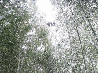 雪の高台寺 竹林