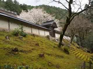 勅使門と御車返しの桜